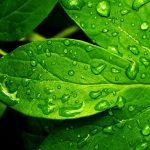 Vedayur para una salud natural
